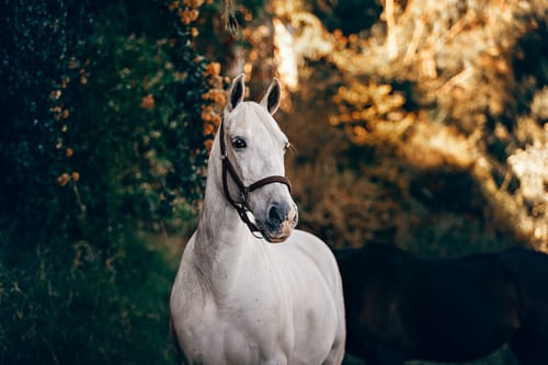 Top tips to find the best supplier for horse care tools