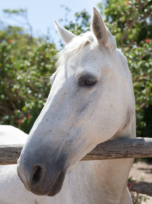 Important things to know about equine eye protection